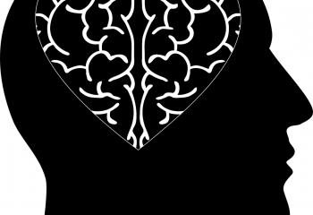 cranium-ge6c0f65d4_1280